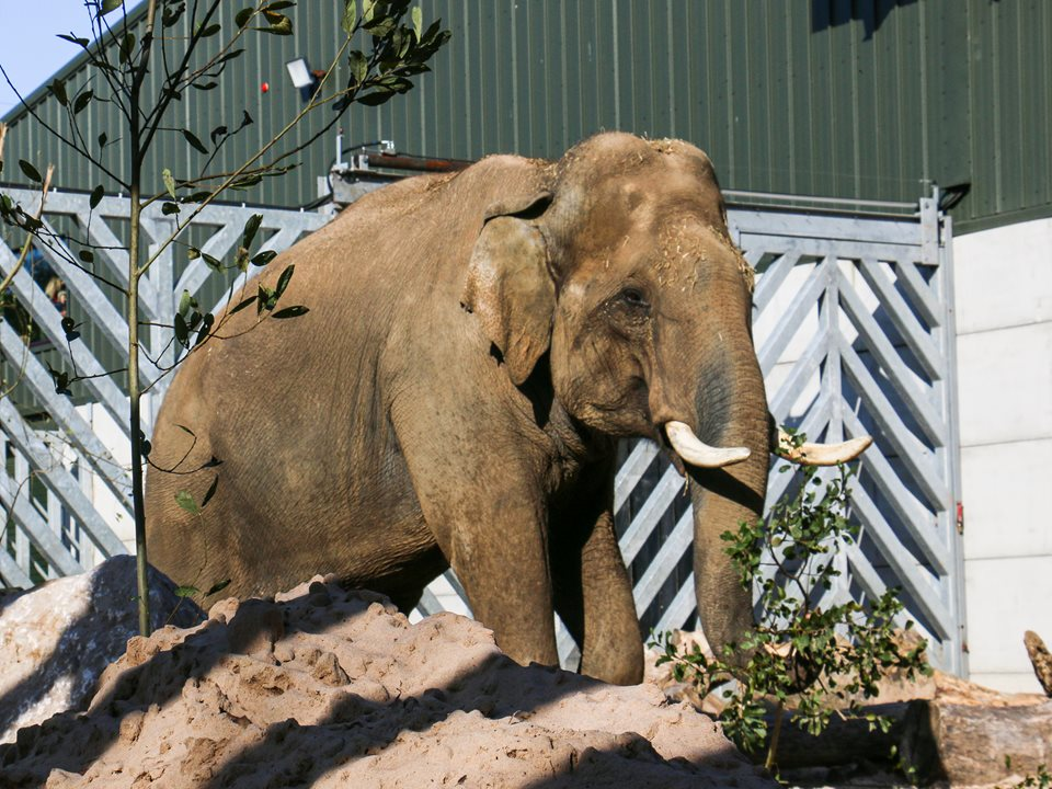 Emmett the elephant arrives in Blackpool!