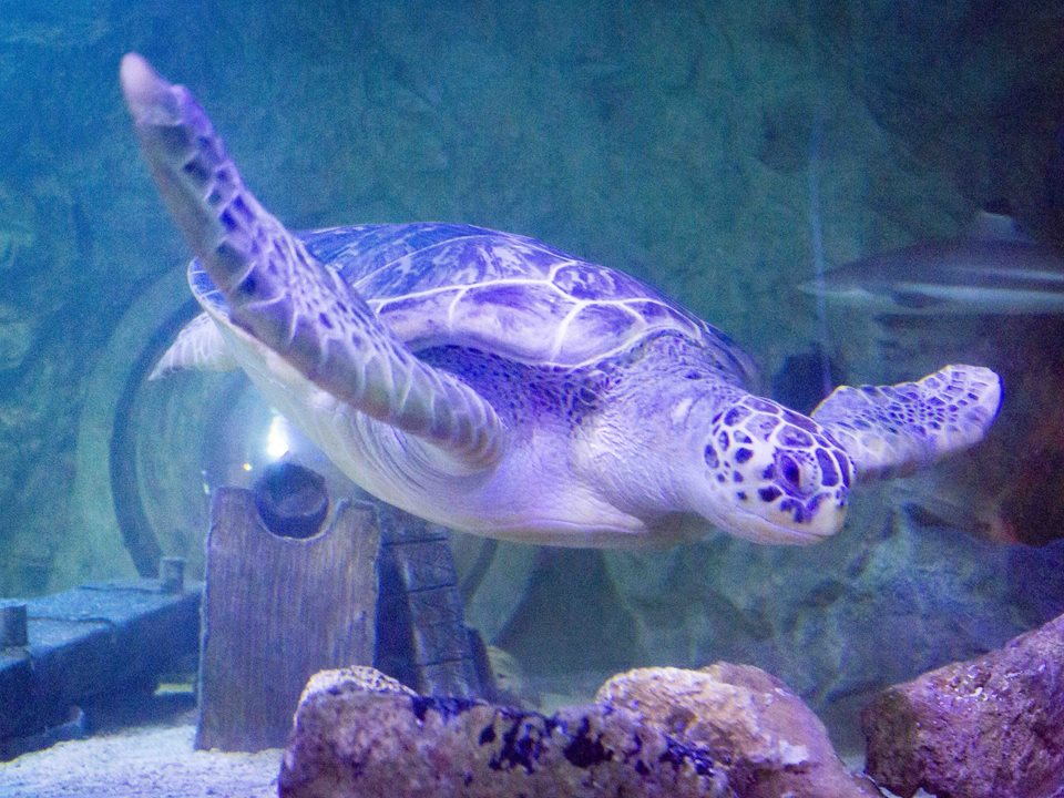 SEA LIFE Blackpool unveils 'amazing' annual pass offer.