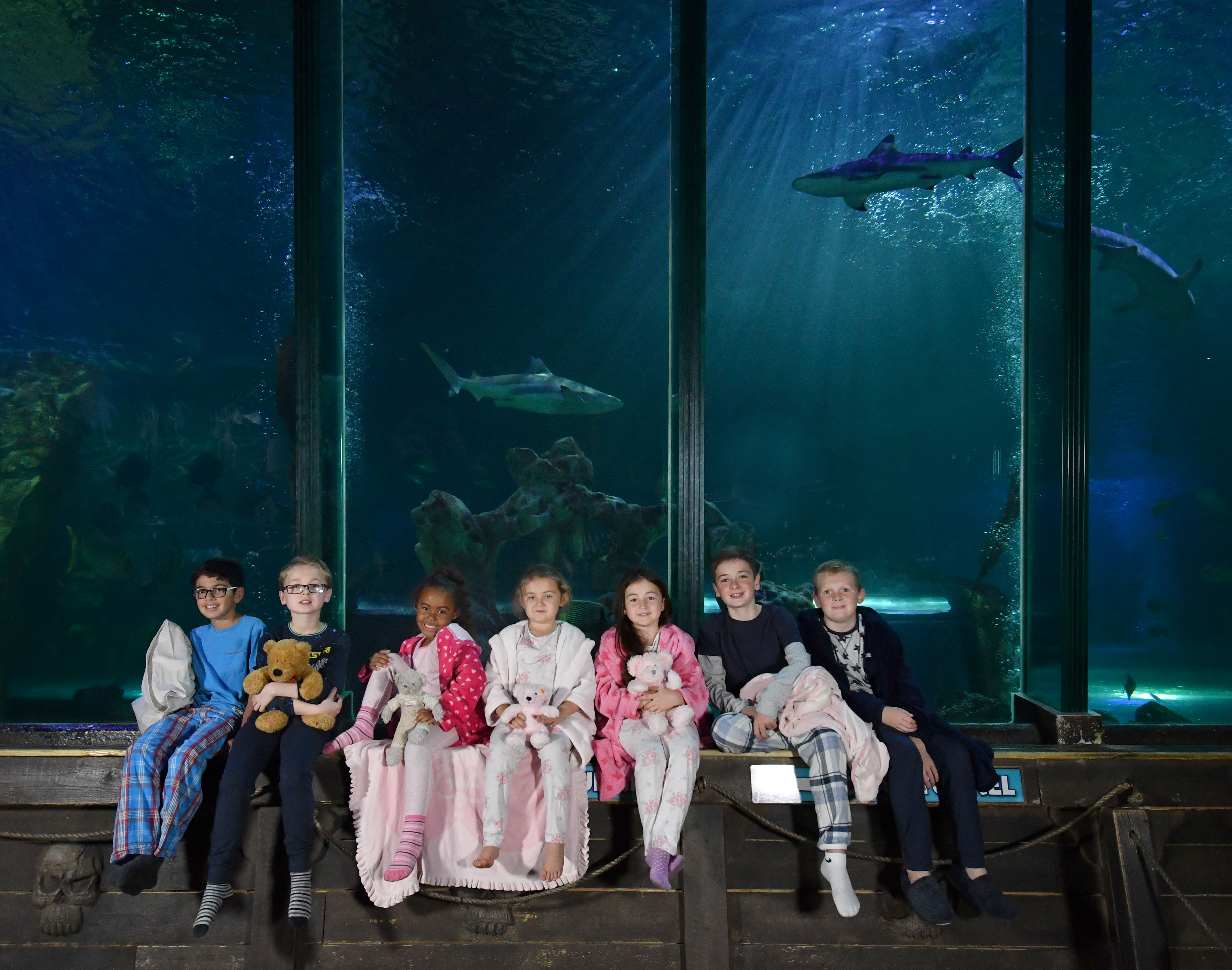 Its going to be a 'blue Christmas' for gift-buyers at SEA LIFE Blackpool